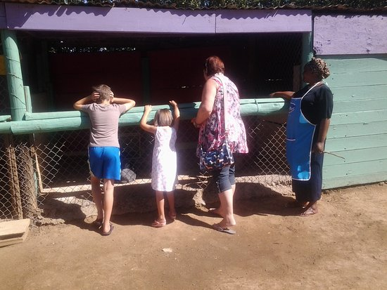 Uitenhage, Sudáfrica: Looking at the rabbits with Ouma Rosie