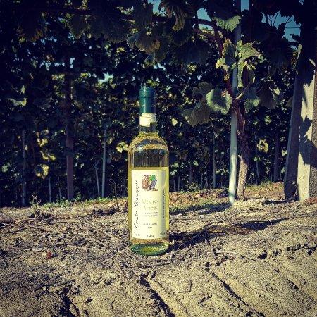 Monta, Italia: Roero Arneis nelle vigne