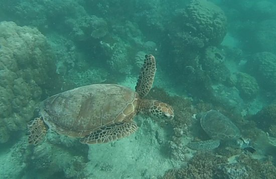 Aquanature: great to see these guys... 2 in this pic