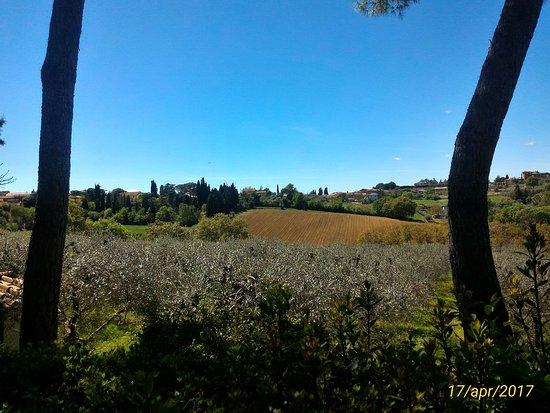Pozzuolo, Italia: P_20170417_140636_1_p_large.jpg