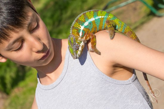 Kidlington, UK: Educational talk and handling on tropical reptiles and insects