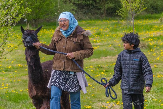 Kidlington, UK: My wife and son enjoying the adventures of Alpaca Leading