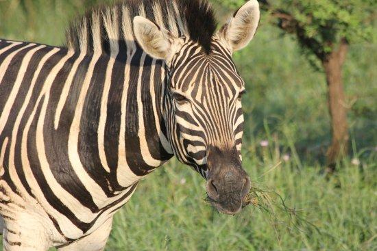 Foto de KwaZulu-Natal