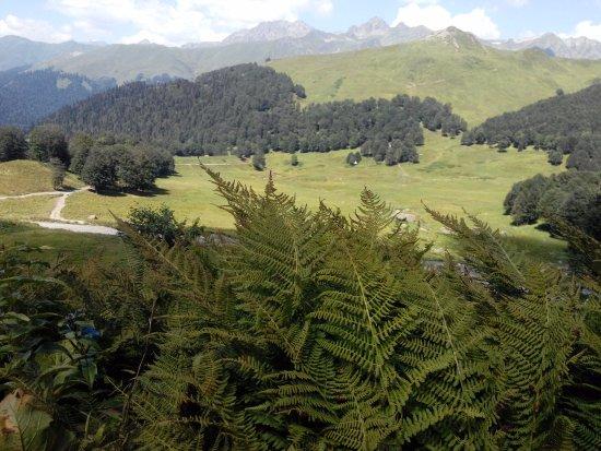 Gudaut'a, จอร์เจีย: Очень красиво и высоко. По дороге много горных речек, проезжаешь живописный сосновый лес.