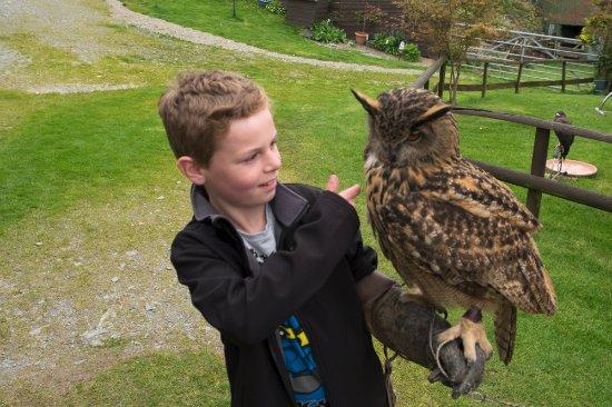 Machynlleth, UK: Eagle Owl