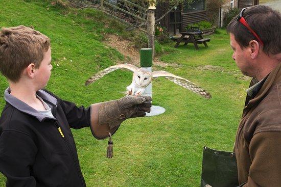 Machynlleth, UK: Barn Owl