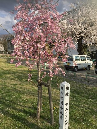 Kajo Park: photo3.jpg