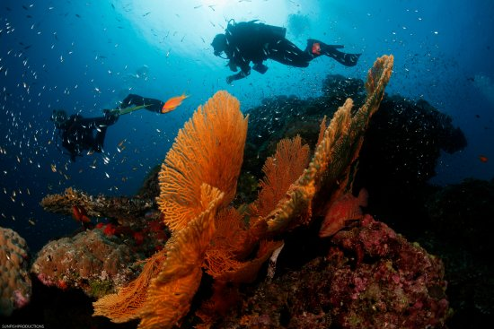 Fanwood, Nueva Jersey: Diving on a reef in Thailand (Similan Islands)