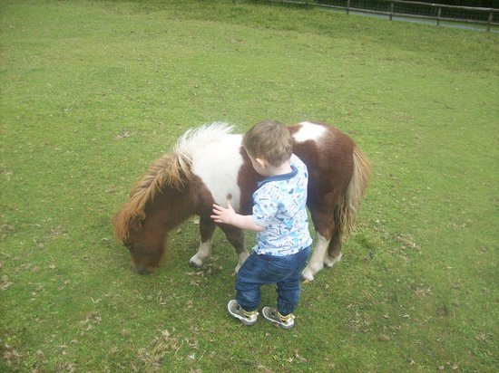 North Bovey, UK: Fluffy Miniature Pony