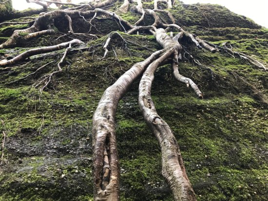 the way the trees grow over the rocks is incredible