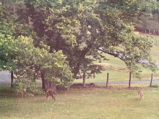 Monterey, VA: Backyard deer in October