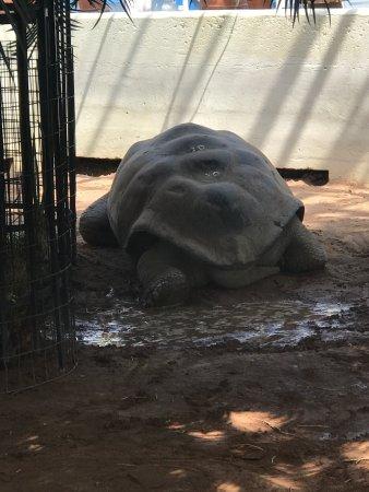 Toledo Zoo: photo1.jpg