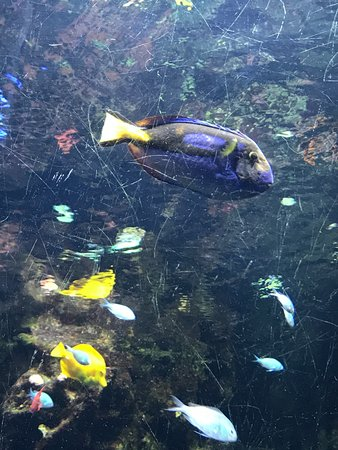 Percorso blu picture of acquario di cattolica cattolica for Blu di metilene acquario