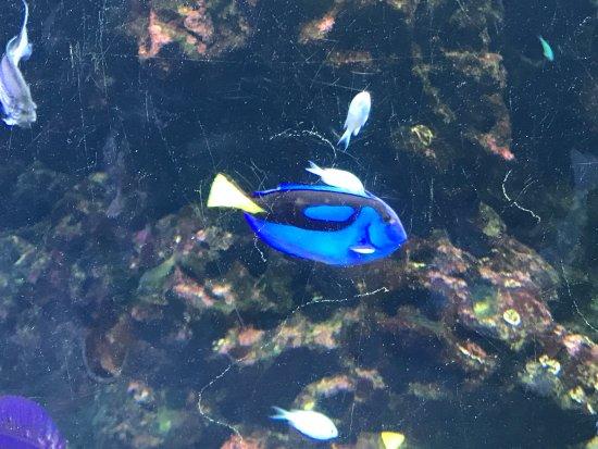 Percorso giallo picture of acquario di cattolica for Blu di metilene acquario