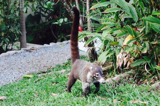Anamaya Resort & Retreat Center: Tierwelt