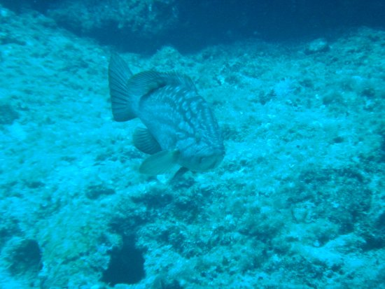Omega Divers Chania Diving Center: Sea Life, Crete