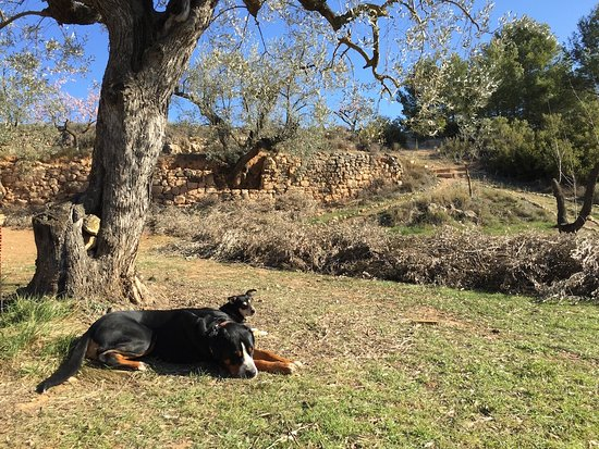 Lledo, Spain: Our dogs, Jabba & Jinx, are super sweet and protect the chickens from foxes
