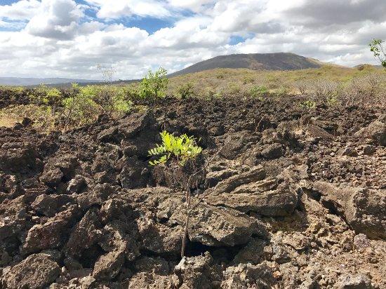 Mombacho Volcano: Blick_auf_den_Mobacho