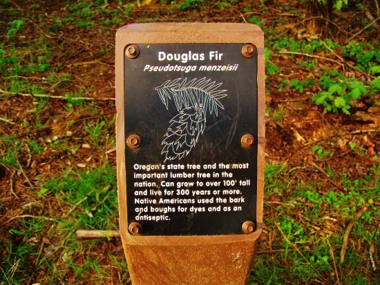 Corbett, OR: Tree marker with facts about Douglas Fir