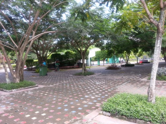 Davao City, Filipinas: Under the Acacia trees are benches where you can relax.
