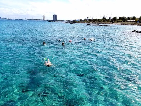 My Islands Adventure Charter Fishing And Snorkeling Tours Peanut Island Snorkel Trip Offers Crystal Clear