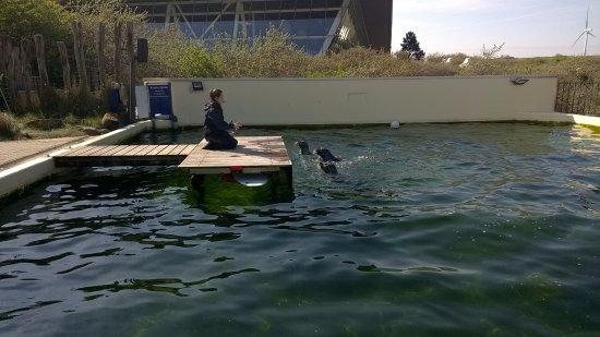 Ouddorp, Nederland: Spettacolo con foche