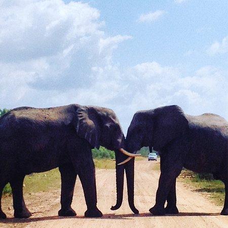 Kruger Flexi Tours - Day Tours: Elephants roadblock Kruger