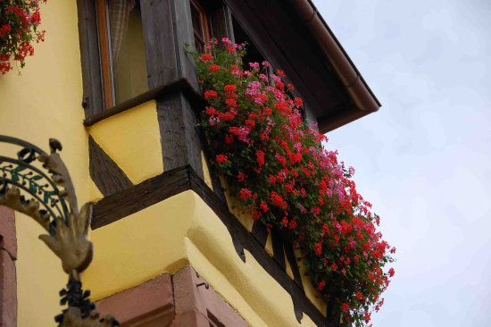 Vieille Ville : red geraniums go well with yellow house