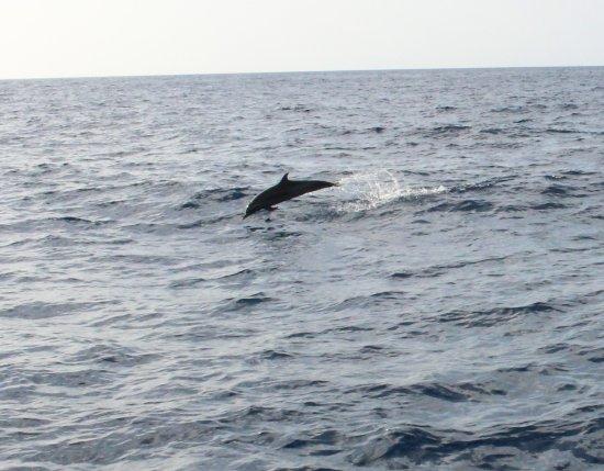 Roseau, Dominica: Dolphin