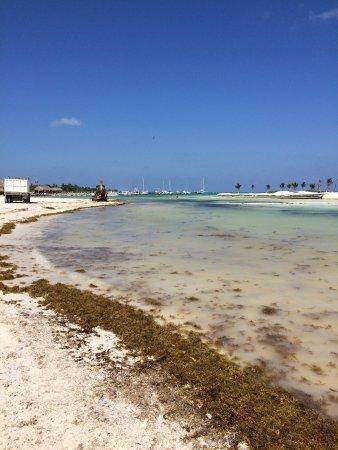 El Dorado Maroma, by Karisma : The sad beach during the April 2017 sargassum infestation