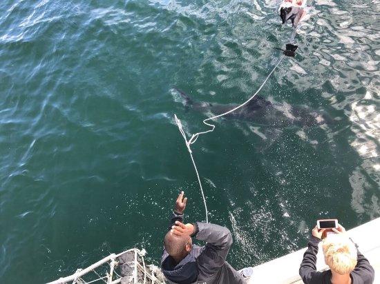 Mossel Bay, South Africa: Das war Cool!😎