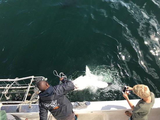 Mossel Bay, Sudáfrica: Das war Cool!😎