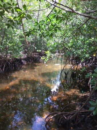 Amani Nature Reserve, Tanzania: mandgrovy