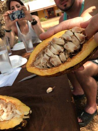 Brasilito, Costa Rica: The Beach Chocolate Factory
