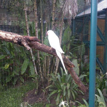 Kuala Lumpur Bird Park: 20170321_125342_large.jpg