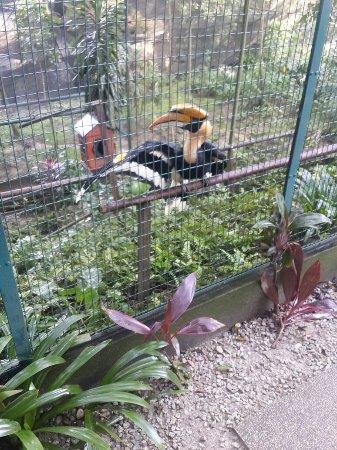 Kuala Lumpur Bird Park: 20170321_130049_large.jpg