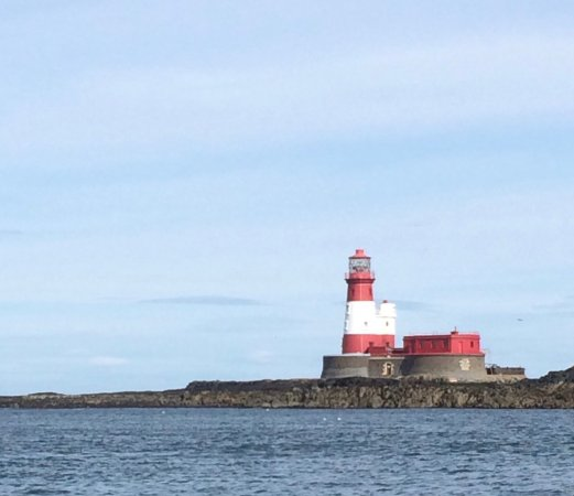 Farne Islands: photo4.jpg