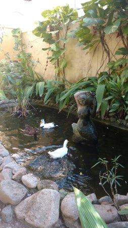 Hotel Villas Sayulita : the ducks in secret garden pond