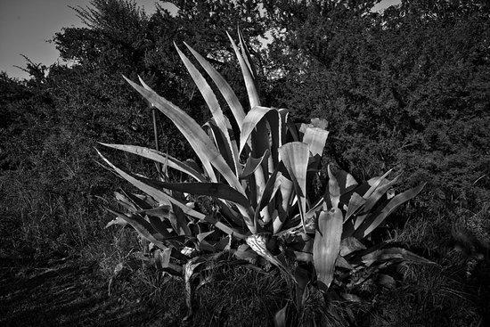 Nono, Argentina: Cactus black&white