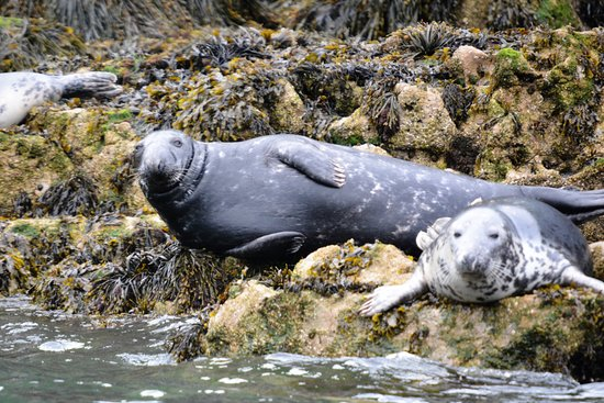 Beaumaris, UK: Seals on the island
