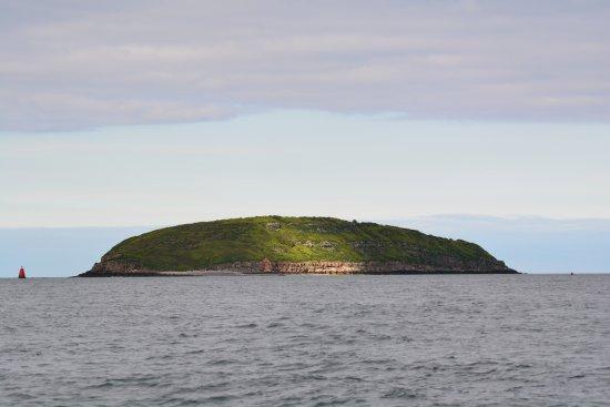 Beaumaris, UK: Puffin Island