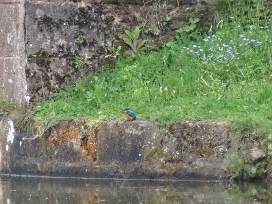 Tiverton, UK: Got a picture of a kingfisher, it was the only one we saw though!