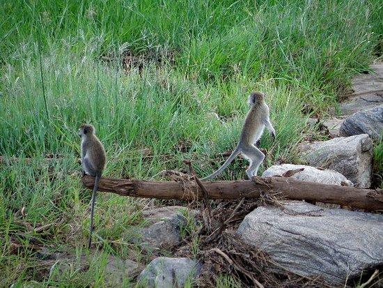 Tarangire National Park, Tanzania: arusha tangire nuit lake burunge camp 22 mars 2017 2017-03-22 291_large.jpg