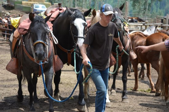 Vail Stables: Gentle horses