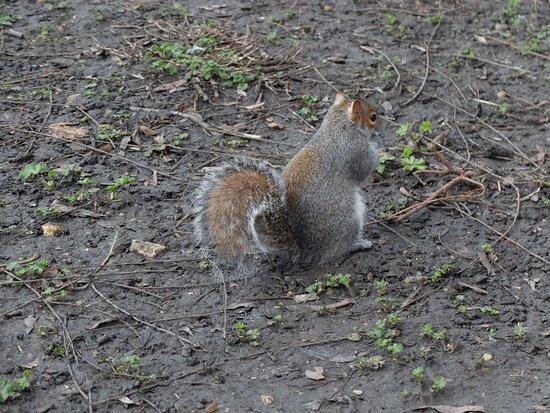 Parque de St. James: Notre animal favori !