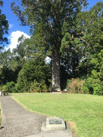 Warkworth, Nueva Zelanda: photo3.jpg