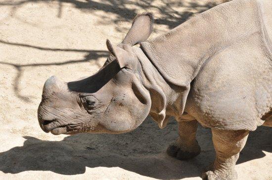 Romaneche-Thorins, Γαλλία: Les rhinocéros