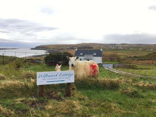 Staffin, UK: Driftwood Sign with sheep and lamb