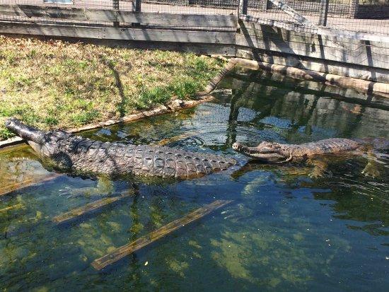 Cost For Alligator Adventure Myrtle Beach Sc