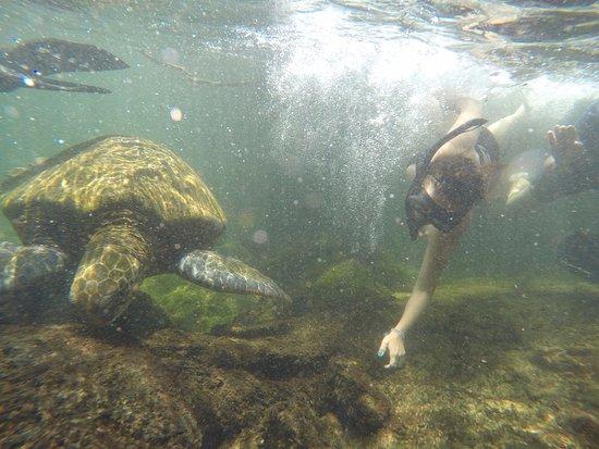 Puerto Villamil, Ecuador: El que los animales te permitan observales de cerca, es maravilloso. Eso, sin tocar ni molestarl